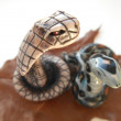 Two decorative ceramic snakes on a white background — Стоковая фотография