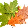 Foto de Stock  : Dry green and brown leaves on white background