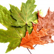 Photo: Dry green and brown leaves on white background