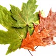 Dry green and brown leaves on white background — Stok Fotoğraf #36539903