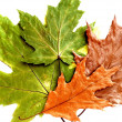 Стоковое фото: Dry green and brown leaves on white background