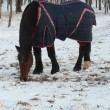 Horse in the blanket of winter snow  park — Stock Photo