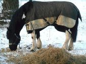 Horse in the blanket winter on a snow — Stock Photo