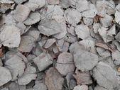 Dry foliage gray background — Stock Photo