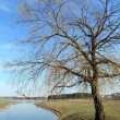 Willow tree by the lake on a background of blue sky — Stock Photo #44823173
