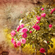 Old grunge vintage postcard with beautiful roses. - Stock Photo