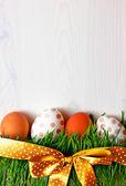 Oeufs de pâques sur l'herbe — Photo