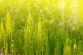 Hojas y pasto verde fresco. — Foto de Stock