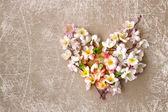 Corazón decorativo de flores de primavera. — Foto de Stock