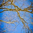 Spring time in park, tree branches with blue sky — Stock Photo #24967303