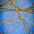 Spring time in park, tree branches with blue sky - Stock Photo