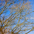 Spring time in park, tree branches with blue sky — Stock Photo