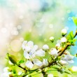 Stock Photo: Beautiful closeup spring blossoming tree