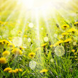 Stock Photo: Spring background with dandelions and sunbeams