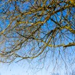Spring time in park, tree branches with blue sky — Stock Photo #24967707