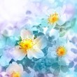 Beautiful spring background with flowers and blur. — Stock fotografie