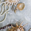 Pearl necklace and seashell over stones — Stockfoto