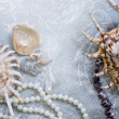Pearl necklace and seashell over stones — Stock Photo