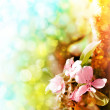 Beautiful spring background with pink flowers — Stock Photo #24968871