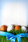 Easter eggs on the grass — Stok fotoğraf