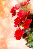 Spring background with beautiful roses — Stock Photo