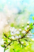 Beautiful closeup spring blossoming tree — Stock Photo