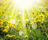 Jarní pozadí s pampelišky a sluneční paprsky — Stock fotografie