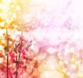 春の花、明るい背景ぼかし色 — ストック写真