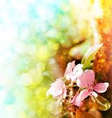 Fundo de linda primavera com flores cor de rosa — Foto Stock