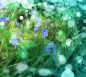 Little blue flowers in the spring background — Stock Photo