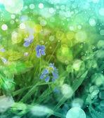 Foto van kleine blauwe bloemen in de lente-achtergrond — Stockfoto