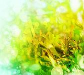El paisaje fresca mañana con sol desenfoque — Foto de Stock
