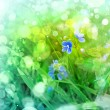 Spring young blue flowers with green grass - Stock Photo