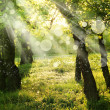 Spring nature background with sun beam, green landscape with sunshine. — Stock Photo #24970181