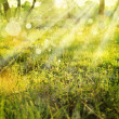 Eco nature with sun beam, green landscape background with sunshine. — Stock Photo