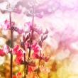 Beautiful spring background with pink flowers - Stock Photo