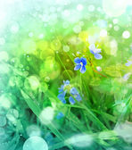 Spring young blue flowers with green grass — Stock Photo
