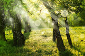 Spring nature background with sun beam, green landscape with sunshine. — Stock Photo