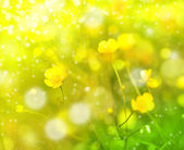Field flowers, buttercup — Stock Photo