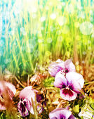 Spring background with a flowers — Stock Photo