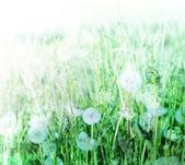 Landscape with sun blur — Stock Photo
