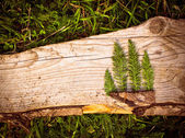 Wooden board in the forest — Stock Photo
