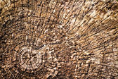 Old wood cut texture. — Stock Photo