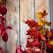 Stock Photo: Vintage Autumn border from ashberry and and fallen leaves on old wooden table.