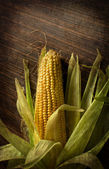 Ripe corn on a dark wooden table with grunge texture — Stock Photo