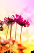用鲜花春天背景 — 图库照片