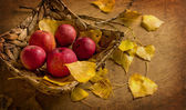 Red apples with basket — Stock Photo