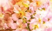 Flores de primavera linda com a luz do sol — Foto Stock