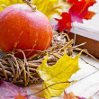 Thanksgiving day decoration — Stock Photo