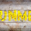 "Yellow dandelions forming word ""SUMMER"" — Stock Photo"